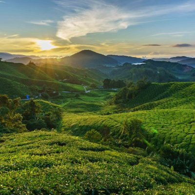 The Cameron Highlands – Pahang
